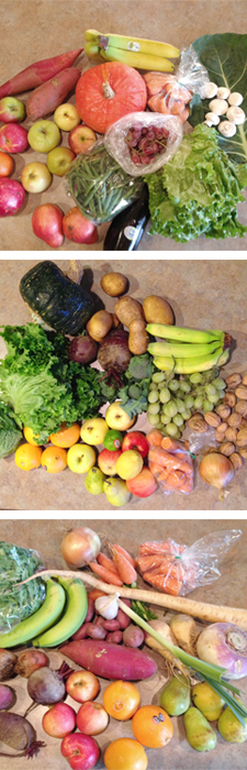 A variety of beautiful produce received in my weekly garden boxes. | www.scld.org