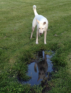 Mud Puddles: to jump or not to jump.