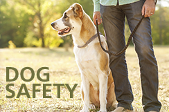 Feature_DogSafety